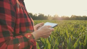 De meisjeslandbouwer met een tablet controleert het gewas, graangebied bij zonsondergang, langzame geanimeerde video Handen omhoo stock videobeelden