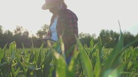 De meisjeslandbouwer met tablet controleert gewas, graangebied, zonsondergang, langzame geanimeerde video stock videobeelden