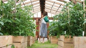 De meisjeslandbouwer in strohoed en kleding geeft het gewas in de bedden van gieter water stock footage