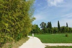 De meisjeslooppas langs de weg van het stadspark met een struikgewas van bamboe-blad-drager van blauwgroene lat Phyllostachys vir Stock Fotografie