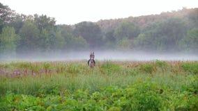 De meisjesruiter berijdt vroeg op het gebied op een paard in de ochtend, rondom de mist stock videobeelden