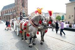 De meisjesruiter nodigt aan de rit van het paardvervoer in Krakau, Polen uit Stock Afbeeldingen