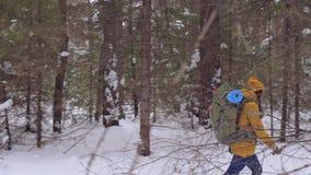 De meisjestoerist gaat op een de winter bosweg met een rugzak op zijn schouders stock video