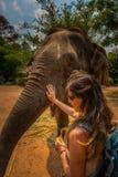 De meisjestoerist voedt bananen aan olifant thailand stock afbeeldingen