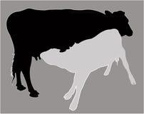 De melk van de kalfszuigeling, silhouetvector Royalty-vrije Stock Fotografie