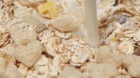De melk wordt gegoten in droog ontbijt, langzame motie Sluit omhoog stock video