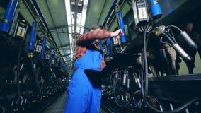 De melkende machines voor koeien worden geregeld door een mannelijke arbeider stock video