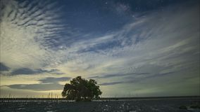De Melkweg achter de wolken wordt verborgen die De bomen in het mangrovebos stock videobeelden