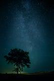 De Melkweg boven een eenzame boom Stock Fotografie