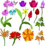 De mengeling van bloemen Royalty-vrije Illustratie