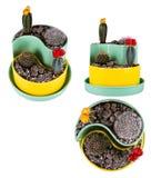 De mengeling van de cactus Stock Foto's