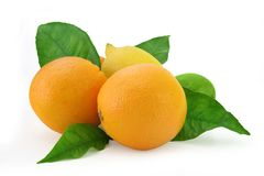 De mengeling van de citrusvrucht Stock Foto