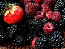 De mengeling van het fruit Royalty-vrije Stock Fotografie