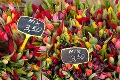 De Mengeling van tulpen op Albert Cuypmarkt, Amsterdam Stock Afbeeldingen
