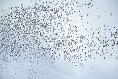 De menigte van knuppel vliegt uit van hol Stock Fotografie