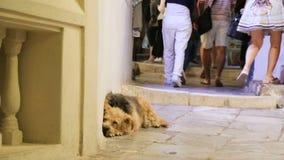 De menigten van onverschillige mensen die door miserabele zieken lopen dwalen hond liggend in straat af stock footage