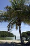 De mening aan Florida baai van het centrum van de flamingobezoeker everglades verklaart nationaal park de V.S Stock Foto