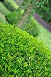 De mening, de struik die in vorm wordt gehandhaafd en de bomen van de tuin Royalty-vrije Stock Afbeeldingen