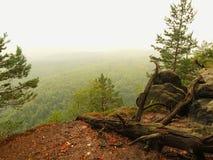 De mening in diepe nevelige vallei, pieken van bomen steeg van de herfstmist Royalty-vrije Stock Foto