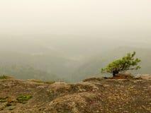 De mening in diepe nevelige vallei, pieken van bomen steeg van de herfstmist Royalty-vrije Stock Fotografie