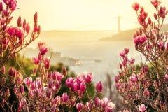 De mening in de lente van de hellingen met bloeiende magnolia op Bosphorus Bloeiende magnolia op de kusten van Bosphorus stock foto's