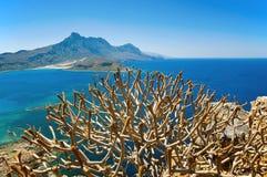 De mening over de struik van Gramvousa, Kreta, Griekenland Stock Foto