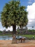 De mening van Angkor wat Stock Foto