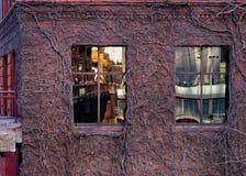 De mening van de brug en cityscape van de Meerstraat zoals die in klimop wordt nagedacht behandelde de bouw` s vensters stock foto's