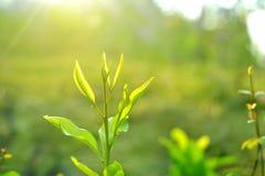 De mening van de close-upaard van Boom hoogste groen blad in tuin bij de zomer onder zonlicht royalty-vrije stock afbeeldingen
