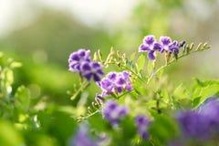 De mening van de close-upaard van groen blad is de Groei omhoog op vage groenachtergrond in tuin die als achtergrond natuurlijke  stock fotografie
