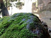 De mening van de close-upaard van groen varenblad op bemoste steen met groenachtergrond bij bos royalty-vrije stock afbeeldingen