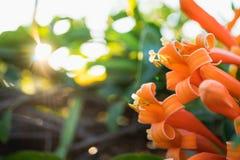 De mening van de close-upaard van oranje bloem Stock Foto's