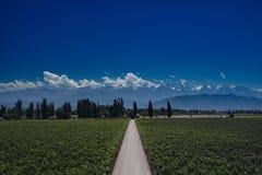 De mening van de Andes met Vinewyards en Weg in Mendoza, Argentinië Stock Foto