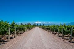 De mening van de Andes met Wijngaard en Weg in Mendoza, Argentinië Royalty-vrije Stock Foto