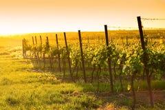De mening van de avond van de wijngaarden Stock Foto's