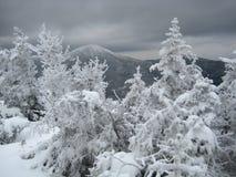 De mening van de berg in de winter, met bomen Royalty-vrije Stock Afbeelding