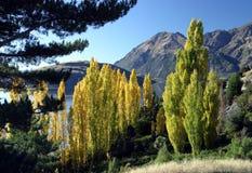 De mening van de berg, Nieuw Zeeland Stock Fotografie