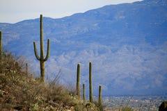 De Mening van de Berg van de woestijn Stock Afbeeldingen