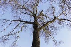 De mening van de boombodem Royalty-vrije Stock Fotografie