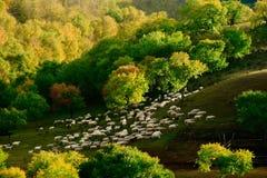 De mening van de dag van de scène van de Herfst in BinnenMongolië Stock Foto's