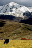 De mening van de dag van hoogland in Yala van Sichuan China Royalty-vrije Stock Fotografie