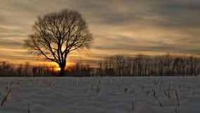 De mening van de de winterzonsondergang van het land Royalty-vrije Stock Foto