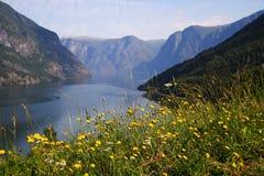 De mening van de fjord Stock Foto