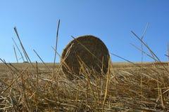 De mening van de grond op een stro verpakt met stro in balen Stock Afbeeldingen