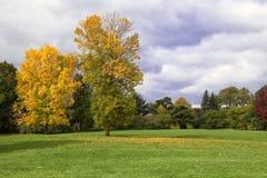 De mening van de herfst Stock Afbeeldingen