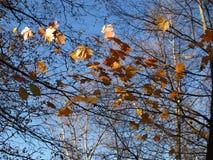 De mening van de herfst Oranje bladeren op zelfs groen gras Stock Afbeeldingen