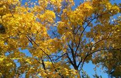 De mening van de herfst Oranje bladeren op zelfs groen gras Royalty-vrije Stock Foto