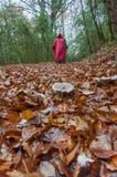 De mening van de herfst Oranje bladeren op zelfs groen gras Bos Stock Foto