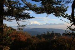 De mening van de Kanchenjungaberg met bomen Royalty-vrije Stock Foto's