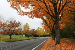 De mening van de kant van de wegherfst in oranje kleur stock fotografie